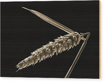 Angled Wheat Wood Print by Terence Davis
