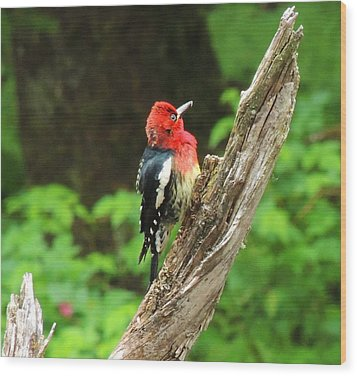 Wood Print featuring the photograph Angry Bird by Karen Horn