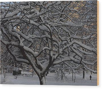 Wood Print featuring the photograph Angular Tree With Snow by Winifred Butler