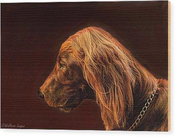 Angus Irish Red Setter Wood Print by Wallaroo Images