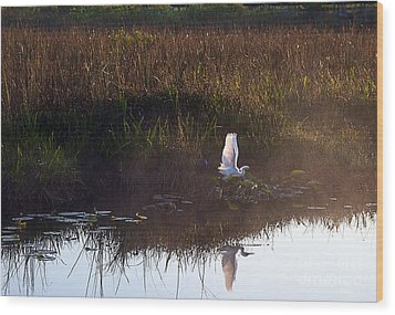 Anhinga Trail Sunrise Wood Print by Bruce Bain