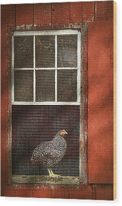 Animal - Bird - Chicken In A Window Wood Print by Mike Savad