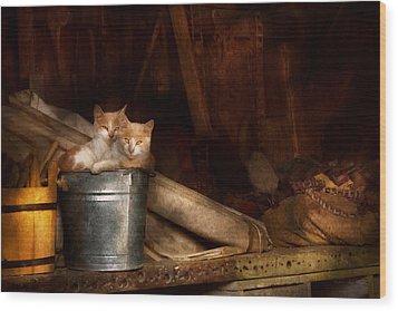 Animal - Cat - Bucket Of Fun  Wood Print by Mike Savad