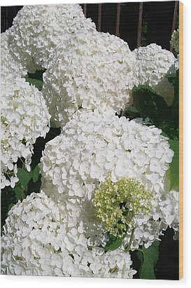 Annabelle Hydrangea  Wood Print