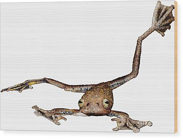 Annam Flying Frog Wood Print by Roger Hall