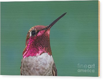 Annas Hummingbird Wood Print by Anthony Mercieca