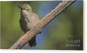 Anna's Hummingbird Baby Wood Print by Heather Coen