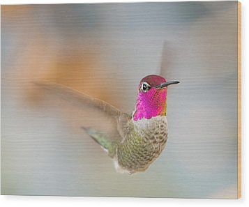 Anna's Hummingbird Wood Print by Doug Herr