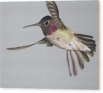 Wood Print featuring the photograph Annas Hummingbird  by Gregory Scott