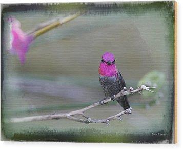 Anna's Hummingbird - Male Wood Print by Angela A Stanton