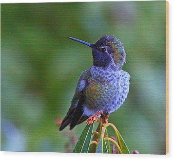 Annas Hummingbird Wood Print by Randy Hall