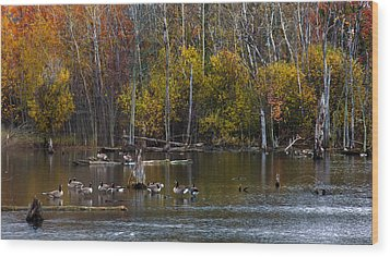 Annual Meet And Greet At The Pond Wood Print