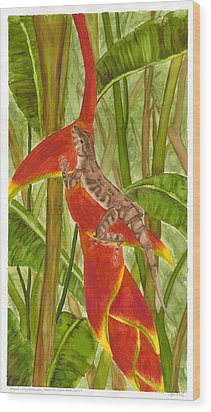 Anolis Humilis Wood Print by Cindy Hitchcock