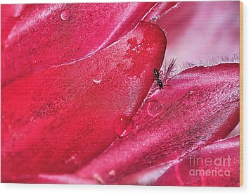 Ant Exploring Protea Petals Wood Print by Kaye Menner