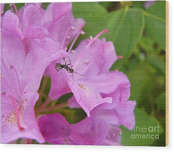 Ant On Flower Wood Print