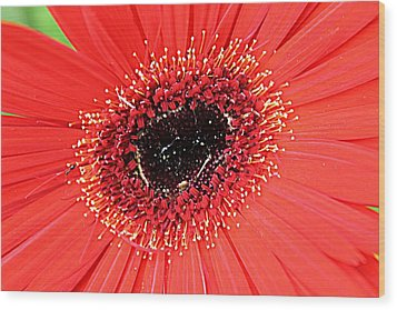 Ant That A Daisy Wood Print by Sarah E Kohara