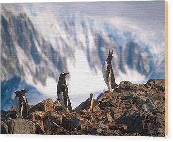 Wood Print featuring the photograph Antarctic Gentoo Penguins by Dennis Cox WorldViews