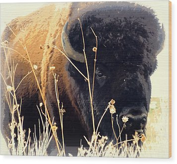 Antelope Island Buffalo Wood Print by Heidi Manly