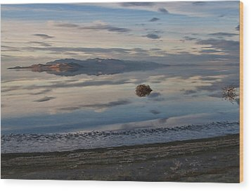 Wood Print featuring the photograph Antelope Island - Lone Tumble Weed by Ely Arsha