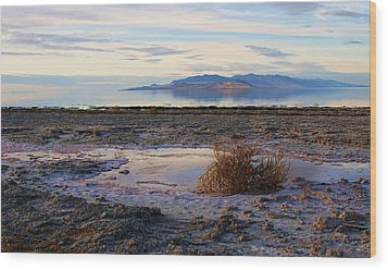 Wood Print featuring the photograph Antelope Island - Tumble Weed by Ely Arsha