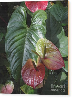 Anthurium Wood Print by Ann Johndro-Collins