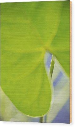 Anthurium Wood Print by Silke Magino