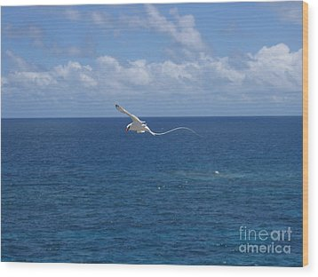 Antigua - In Flight Wood Print by HEVi FineArt