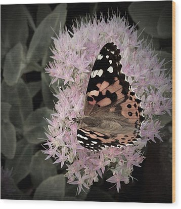 Wood Print featuring the photograph Antique Monarch by Photographic Arts And Design Studio