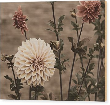 Wood Print featuring the photograph Antiqued Dahlias by Jeanette C Landstrom