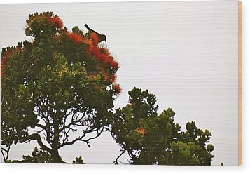 Apapane Atop An Orange Ohia Lehua Tree  Wood Print