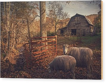 Appalachian Sheep Wood Print by William Schmid