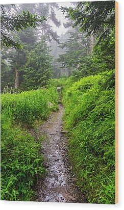 Appalachian Trail At Clingmans Dome Wood Print