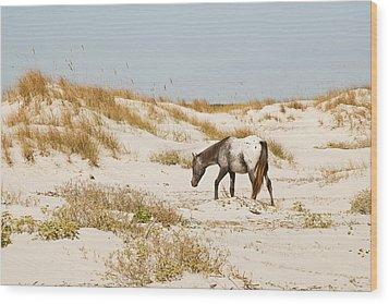 Appaloosa Beach Wood Print by Barbara Northrup
