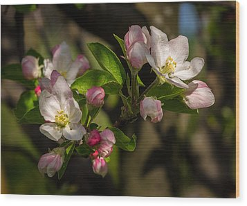 Apple Blossom 3 Wood Print by Carl Engman