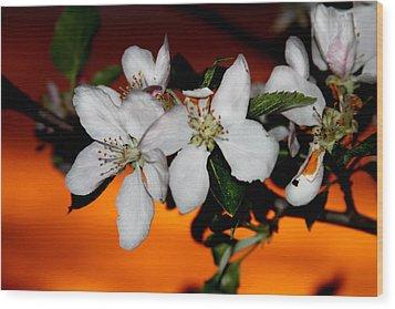 Apple Blossom Sunrise I Wood Print