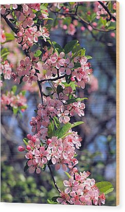 Apple Blossom Time Wood Print by Katherine White