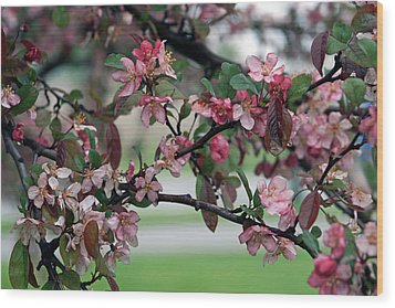 Wood Print featuring the photograph Apple Blossom Time by Kay Novy
