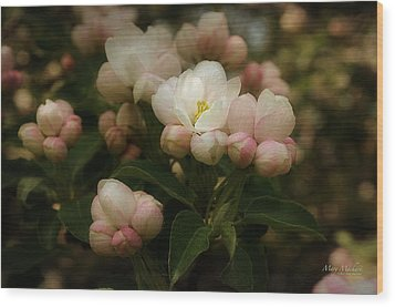 Apple Blossom Time Wood Print by Mary Machare