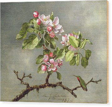 Apple Blossoms And A Hummingbird Wood Print by Martin Johnson Heade