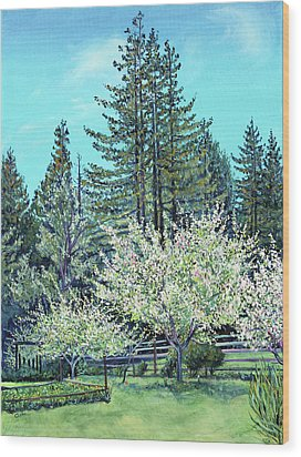 Apple Blossoms And Redwoods Wood Print