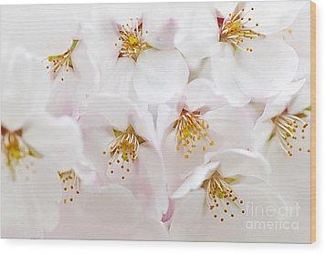 Apple Blossoms Wood Print by Elena Elisseeva