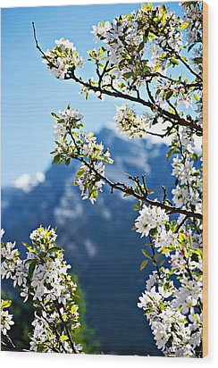 Apple Blossoms Frame The Rockies Wood Print by Lisa Knechtel