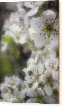 Wood Print featuring the photograph Apple Blossoms by Ken Dietz