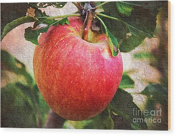 Apple On The Tree Wood Print by Andee Design