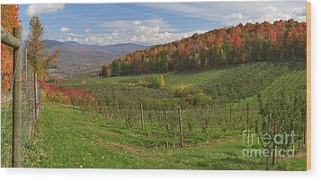 Apple Orchard Panorama Wood Print