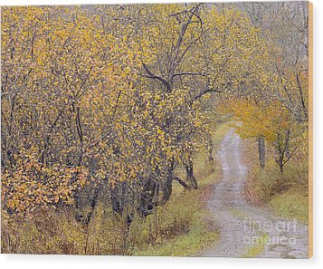 Apple Orchard Road Wood Print by Alan L Graham