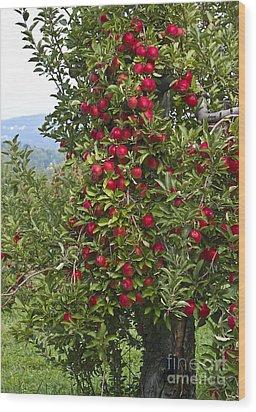 Apple Tree Wood Print by Anthony Sacco