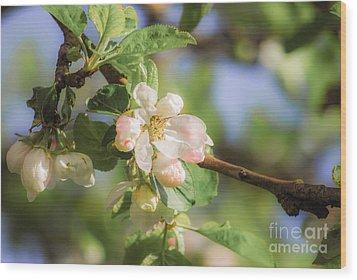Apple Tree Blossom - Vintage Wood Print by Hannes Cmarits
