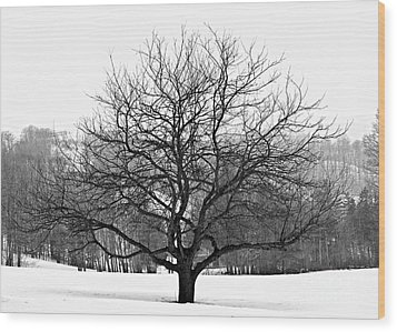 Apple Tree In Winter Wood Print by Elena Elisseeva