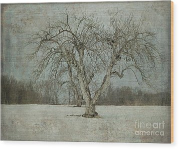 Wood Print featuring the photograph Apple Tree In Winter by Vicki DeVico